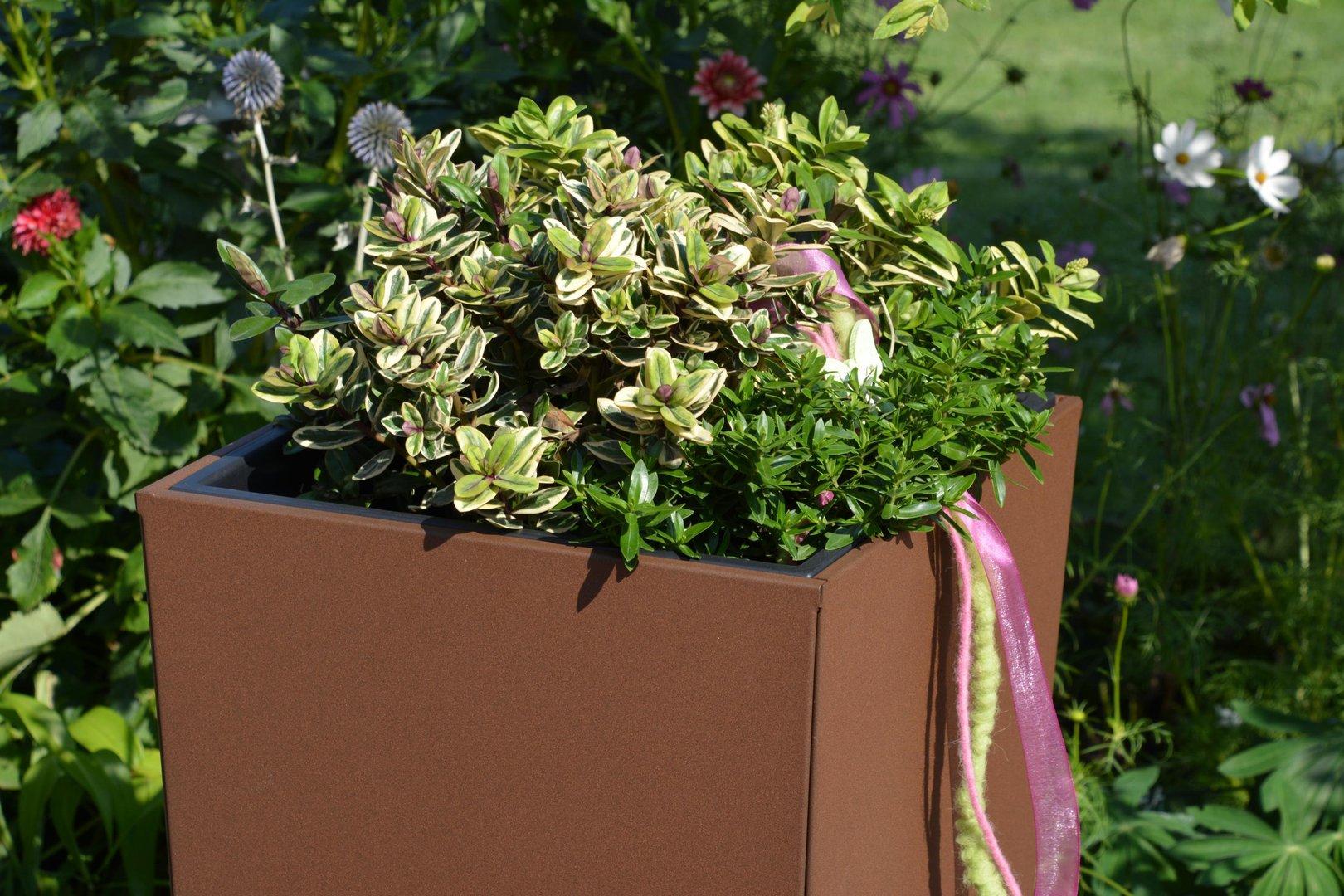 Pflanzkübel Blumenkübel Gerade 39x39 Cm Versch Höhen Beschichtet